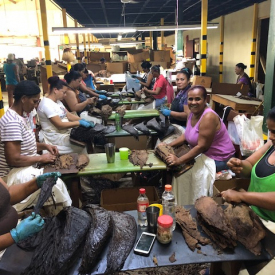 2018-epic-women-separating-tobacco-leafs
